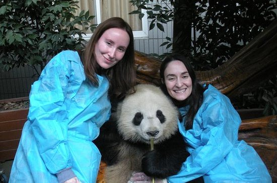 One-Day Private Panda Tour of Chengdu