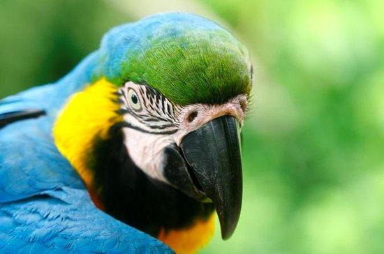 4-Day Jungle of Peru Tambopata Nature...