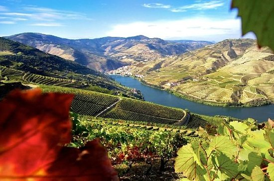Authentic Douro Wine Tour Including...