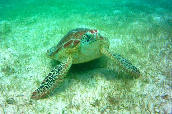 Tour Privado: Akumal Marine Turtle...