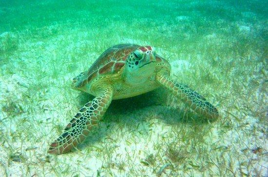 Excursion privée: plongée avec...