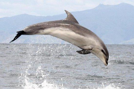 Crucero Ship-Cove y Dolphin Eco-Tour