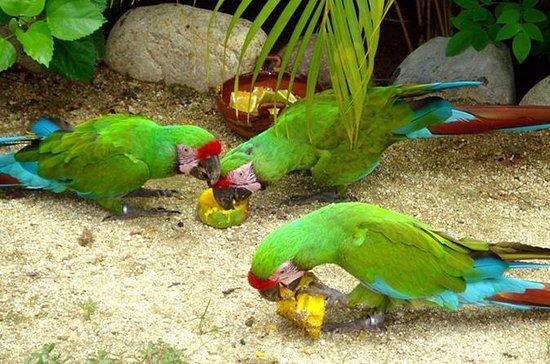 Ixtapa City and Countryside Combo Tour