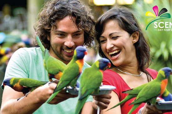 Currumbin Wildlife Sanctuary och ...