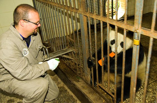 One-Day Dujiangyan Giant Panda Base...