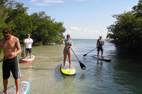 Key West Mangrove Ecosystem Paddleboard Tour