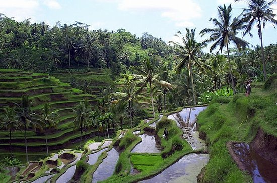 Excursion privée : visite de Ubud