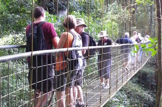 Rainforest Skywalk and Tarcoles River ...
