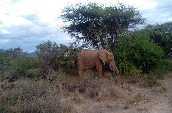 Safari Tsavo privado de 3 días desde...