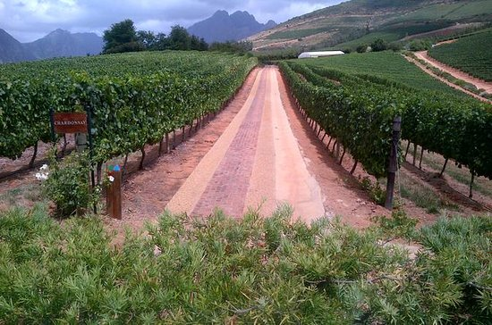 Full-Day Cape Town Based Wine Safari...