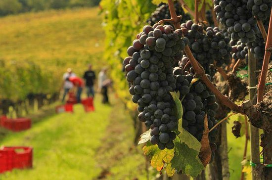 Brunello and Nobile Wine Lovers