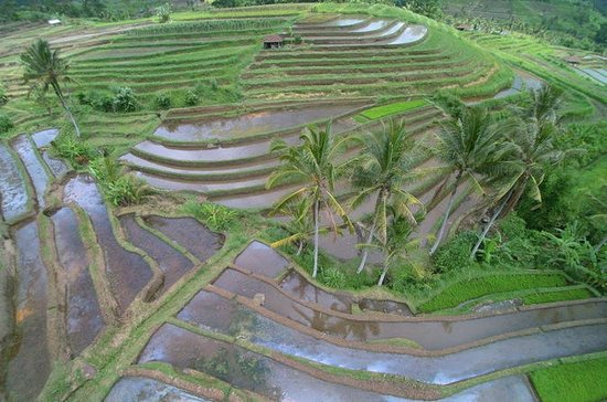 Private Tour: Discover Northern Bali...