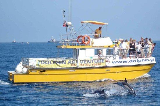 Excursión de avistamiento de delfines...