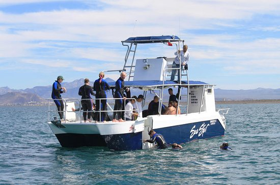 Whale Shark Snorkel from La Paz