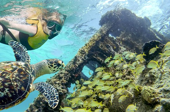 reef and shipwreck snorkeling tour in cancun provided by total