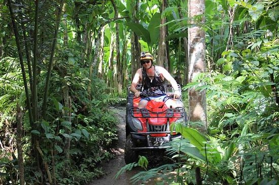 ATV Tour med Monkey Forest Experience...