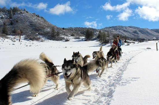 Private Dogsledding Experience