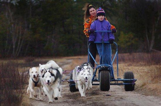 Trineo de perros aventura sobre ruedas