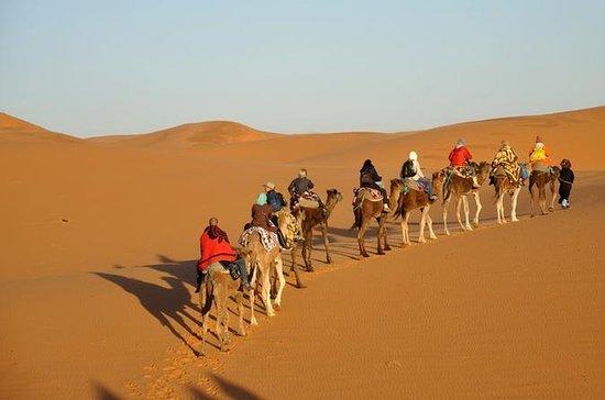 2-Day Zagora Desert Tour from...