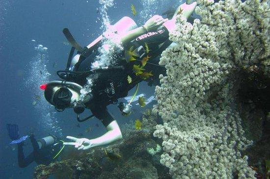 Curso de inmersión en aguas abiertas...