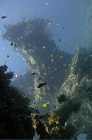 2 PADI Certified Dives at Tulamben...