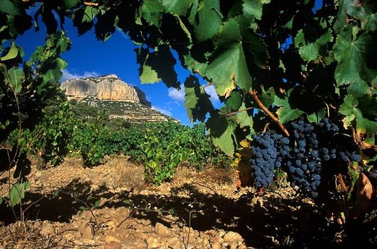 Private Priorat Wine Tour from Barcelona