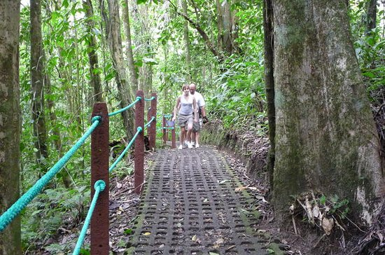 Hanging Bridges and La Fortuna Waterfall Nature Hike