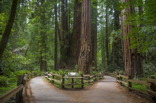 Muir Woods, Wine Country and