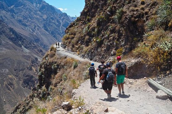 Arequipa to Colca Canyon 3-Day ...