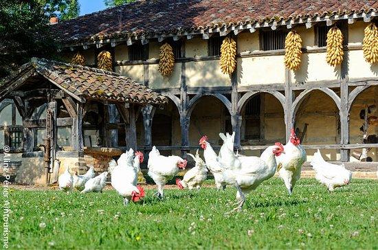 Excursion privée: Lyon gourmet avec...