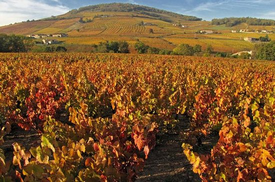 Private Tour: Cycling the Beaujolais...