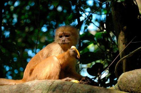 3-dages bolivianske Amazon Pampas...