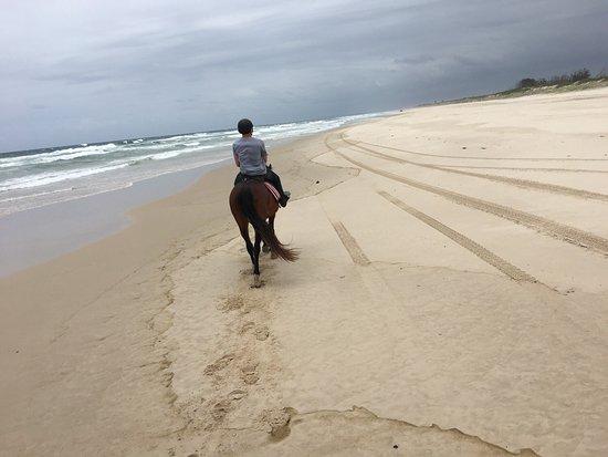 Tassiriki Ranch Beach Horse Riding & Holiday Cabins- Day Tours: photo1.jpg
