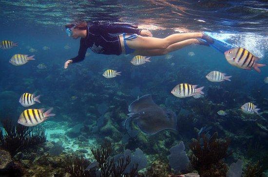 Excursión de buceo de superficie en...