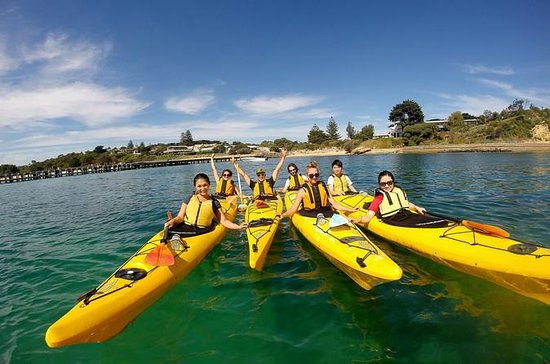 Mornington Peninsula Kayak Coastline Tour of Dolphin Sanctuary