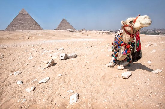 Safari Tour: Horse or Camel Ride at