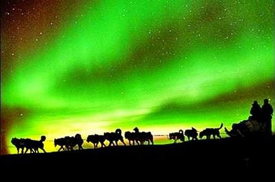 Northern Lights, 1-hour Dog Sledding...