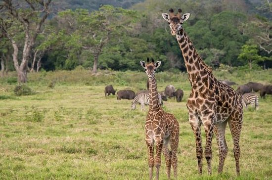 Full- Day Arusha National Park Safari...