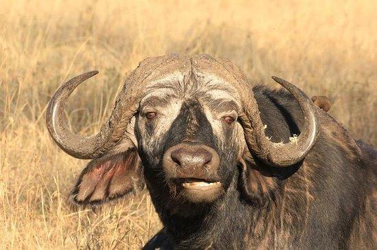 4-Day Wildlife Adventure from Arusha...