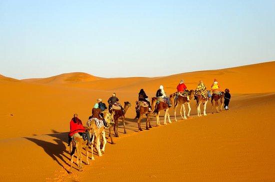3-dagars ökentur från Marrakech