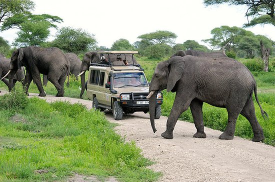 Full-Day Safari to Tarangire National