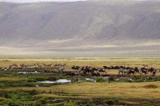 Full-Day Ngorongoro Crater Tour from...