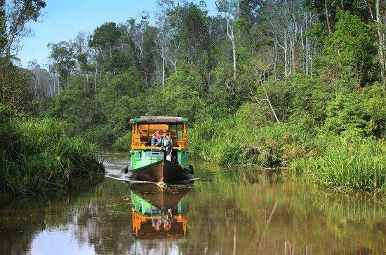 4-Day Private Orangutan and Bornean...