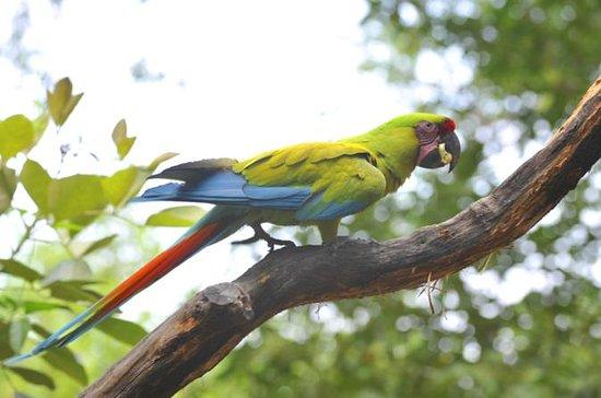 Vogelbeobachtung in Cerro Blanco von...