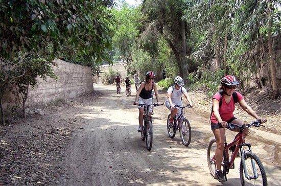 Excursión en bicicleta de montaña de...