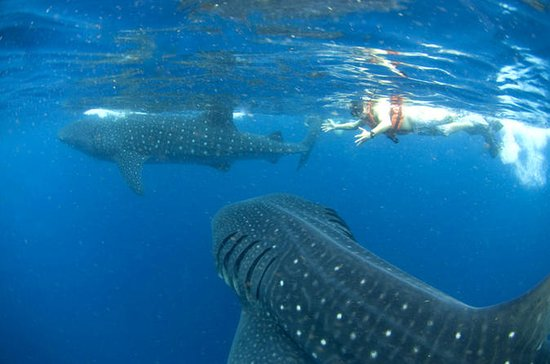 10-Day Wildlife Adventure Tour from...