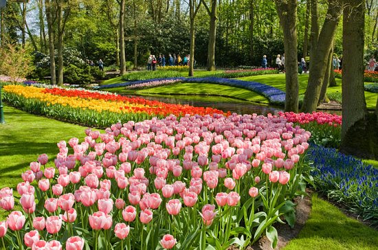 Skip the Line Keukenhof Gardens and...