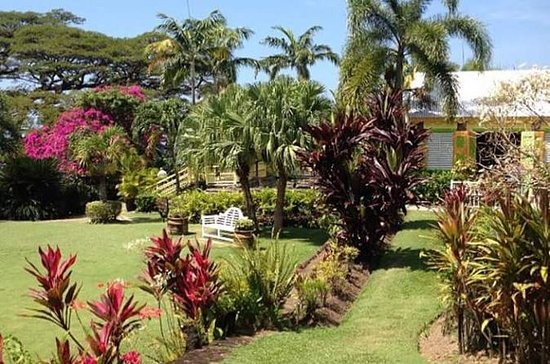 St. Kitts Tour: Basseterre, Wingfield Estate, Romney Manor