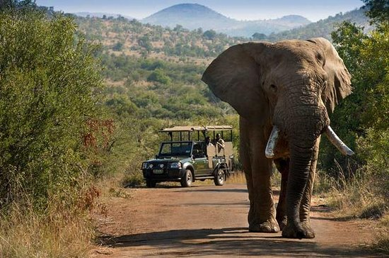 Pilanesberg Safari im offenen...