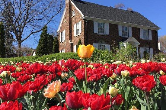 Ottawa Spring Tulip Festival...
